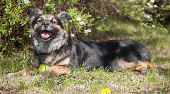 Cerenia – choroba lokomocyjna u psa dzięki temu lekowi nie będzie już więcej problemem